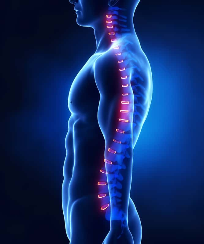 Your spine isn't completely straight; it has a slight S-shaped curve