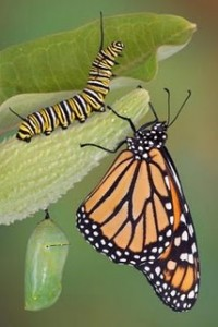 butterfly change transition