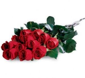 red roses dozen