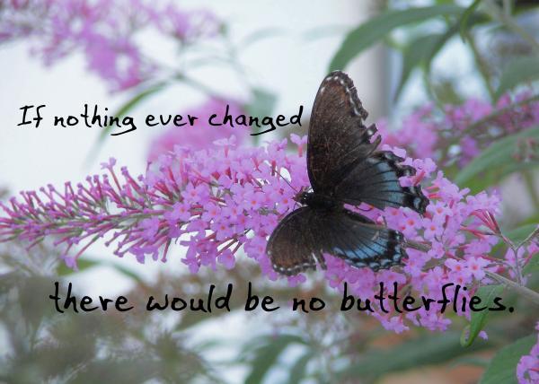 butterfly-kisses-quote-jennifer-demeglio