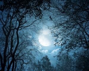 full moon 413300_les_luna_derevya_1280x1024_(www.GdeFon.ru)