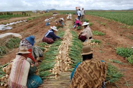 BOLIVIAN WOMEN cq5dam.web.460.306 (1)