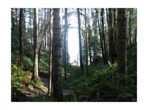 rain_forest_experience_Vancouver_Island
