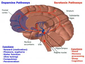 Dopamineseratonin