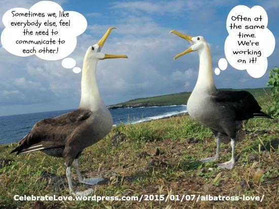 albatross21