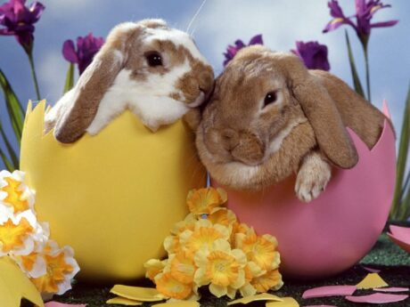 two easter bunnies sitting in one yellow and one pink easter egg