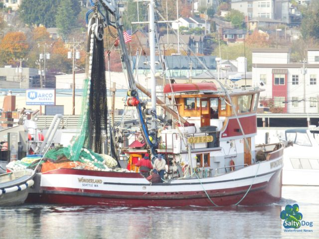 Wonderland, SE AK Seiner, Departing Fishermen's Terminal, to a Ballard Locks Drop, PWN Fall Fishing, Photography by: Salty Dog Boating News, Salty Sea Chick, PNW Canal Marine Traffic Source!
