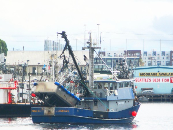 Alaska Fishing Seiners, Fishermen's Terminal, PNW Seiner Hot Spot, Home to a fun large fleet!