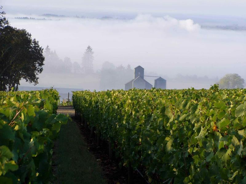 Chehalem Winery Tours