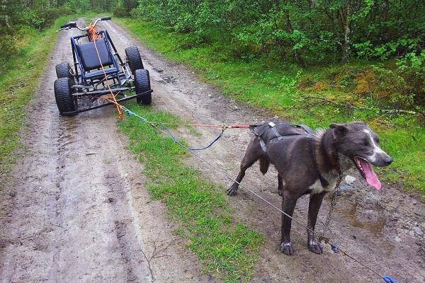 Alaskan Husky Tours