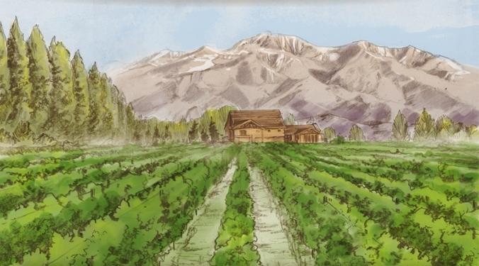 Summer Time in The Piattelli Vineyards