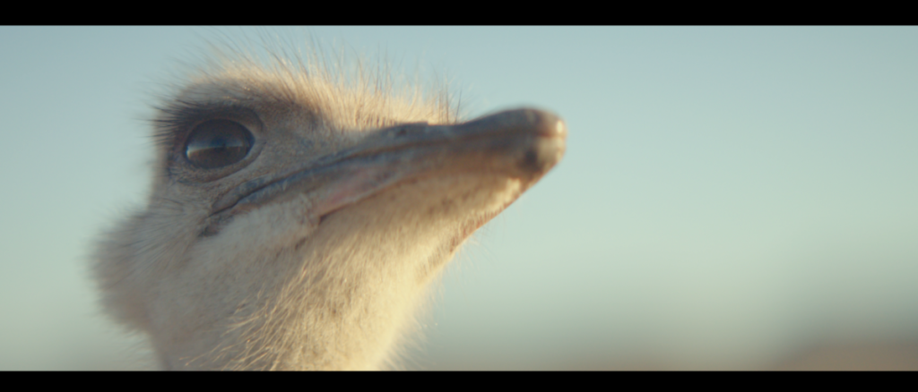 Samsung's ostrich ad scores awards aplenty at Cannes and beyond 4