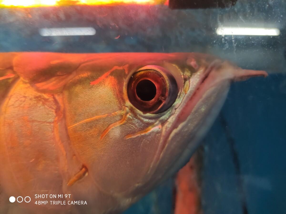 Mi 9T fish macro shot