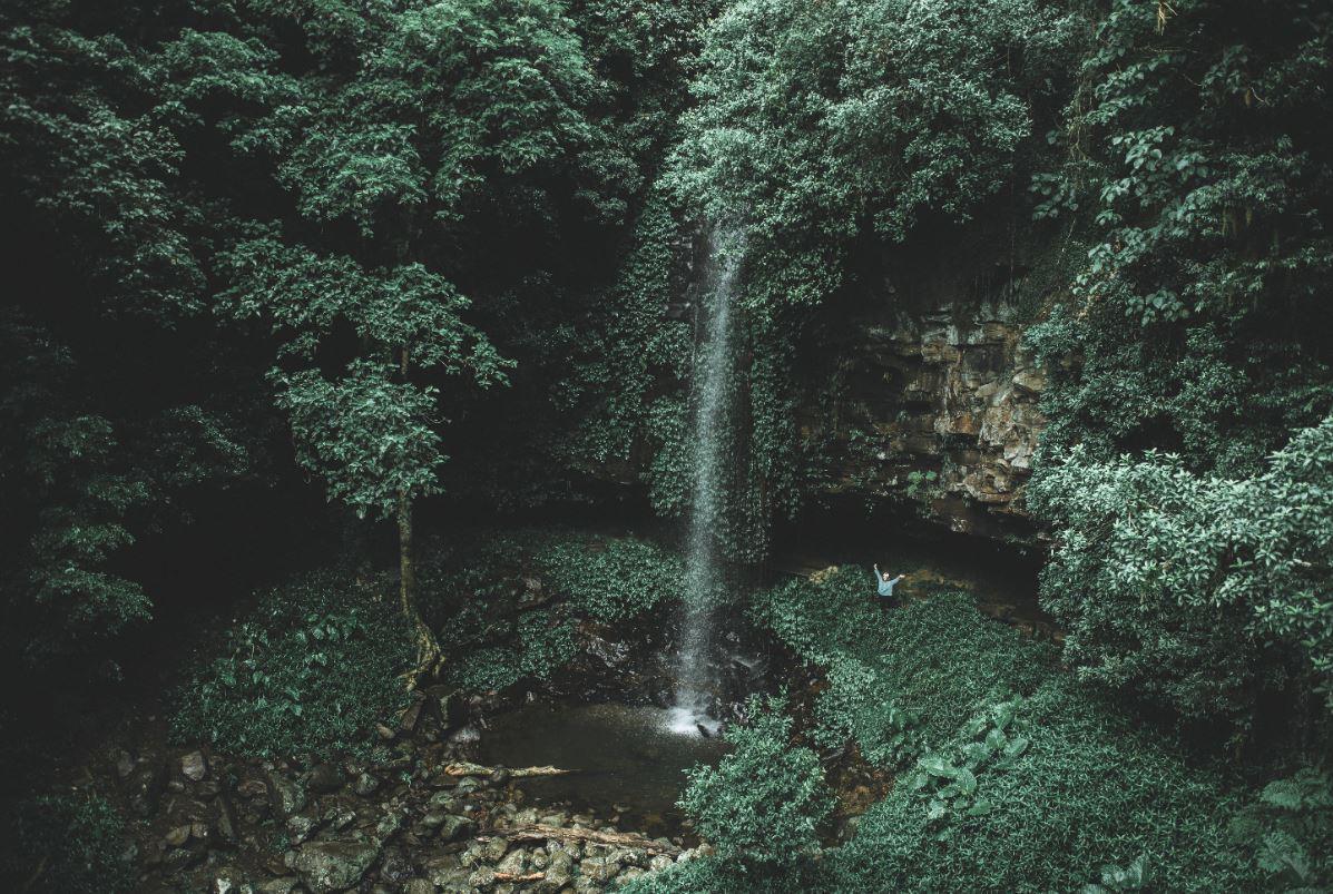 V1 Crystal Shower Falls at Dorrigo National Park Credit Destination NSW