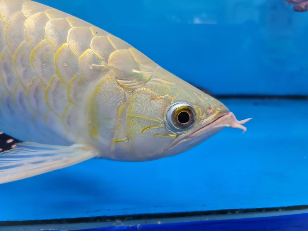 note20 ultra 5g fish