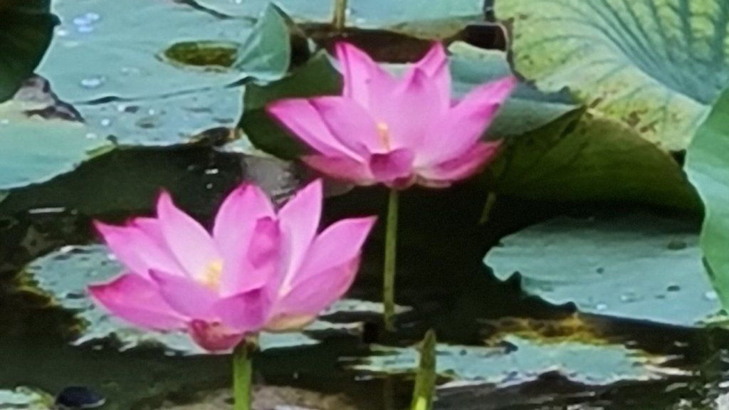 Samsung Galaxy Note20 5G Review lotus