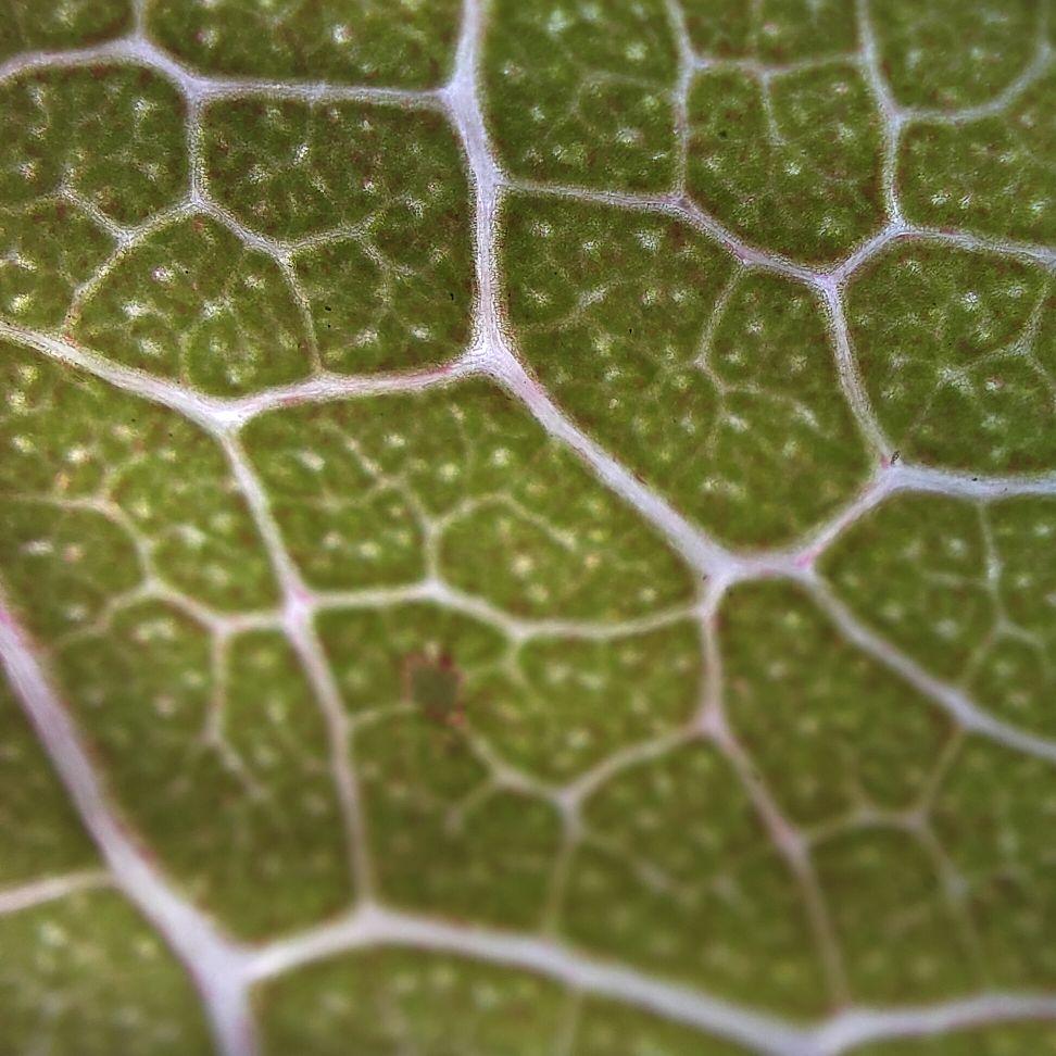 OPPO Find X3 Pro photos microscope camera 4