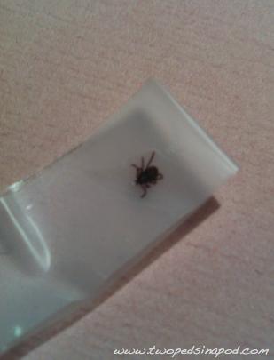 my kid has a tick