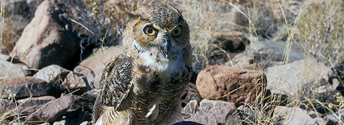 An owl's sleep schedule is hopefully different from your child's