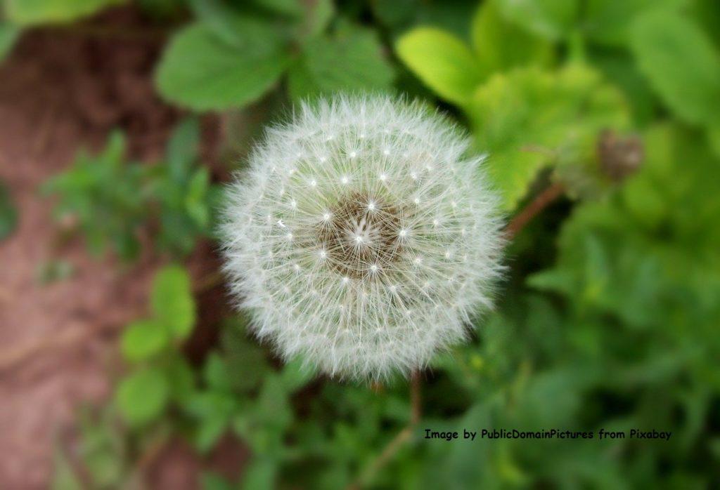 spring allergies or novel coronavirus?