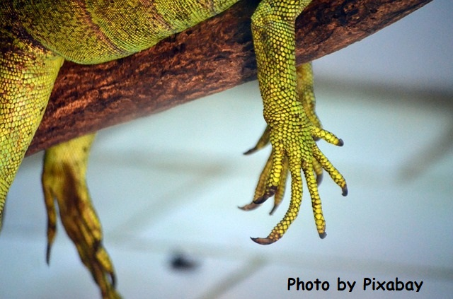 Dry, cracked hands are for lizards