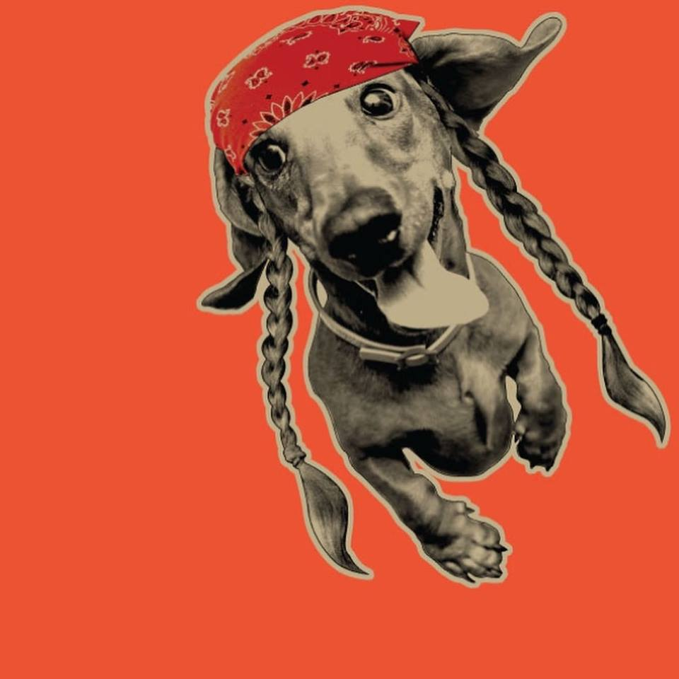 Read more about the article Willie Nelson is getting into pot products for pets