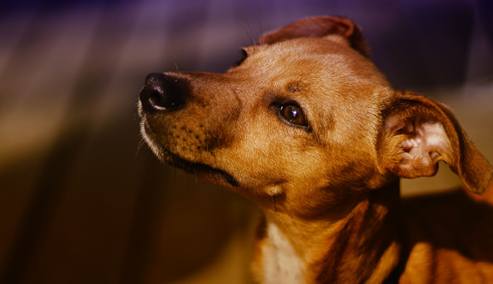 Read more about the article Everything You Need to Know About Getting a Service Dog