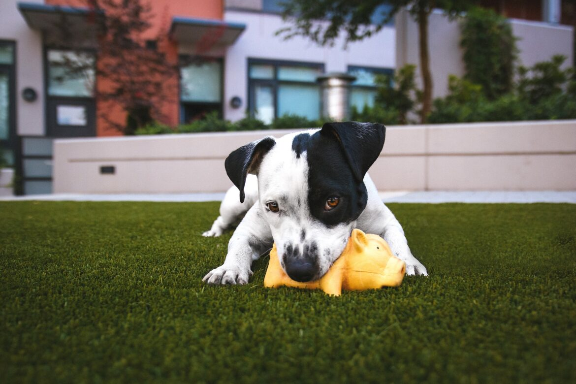Keep Your Dog Busy While You Are At Work or Out