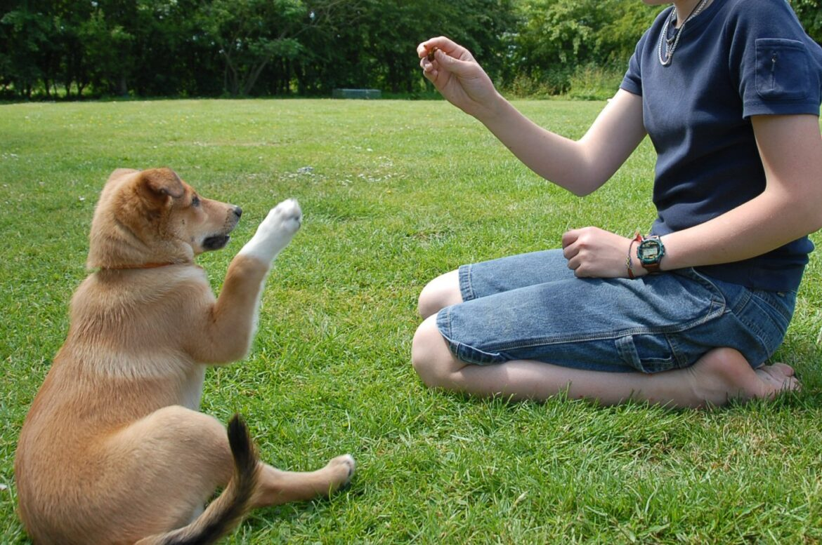 Read more about the article Why Proper Training Is Essential For Dogs