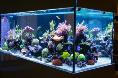 A Guide on Choosing the Best LED Lighting for Your Aquarium