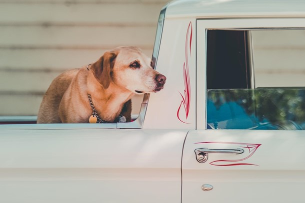 Read more about the article Exploring Country Music's Relationship with Man's Best Friend