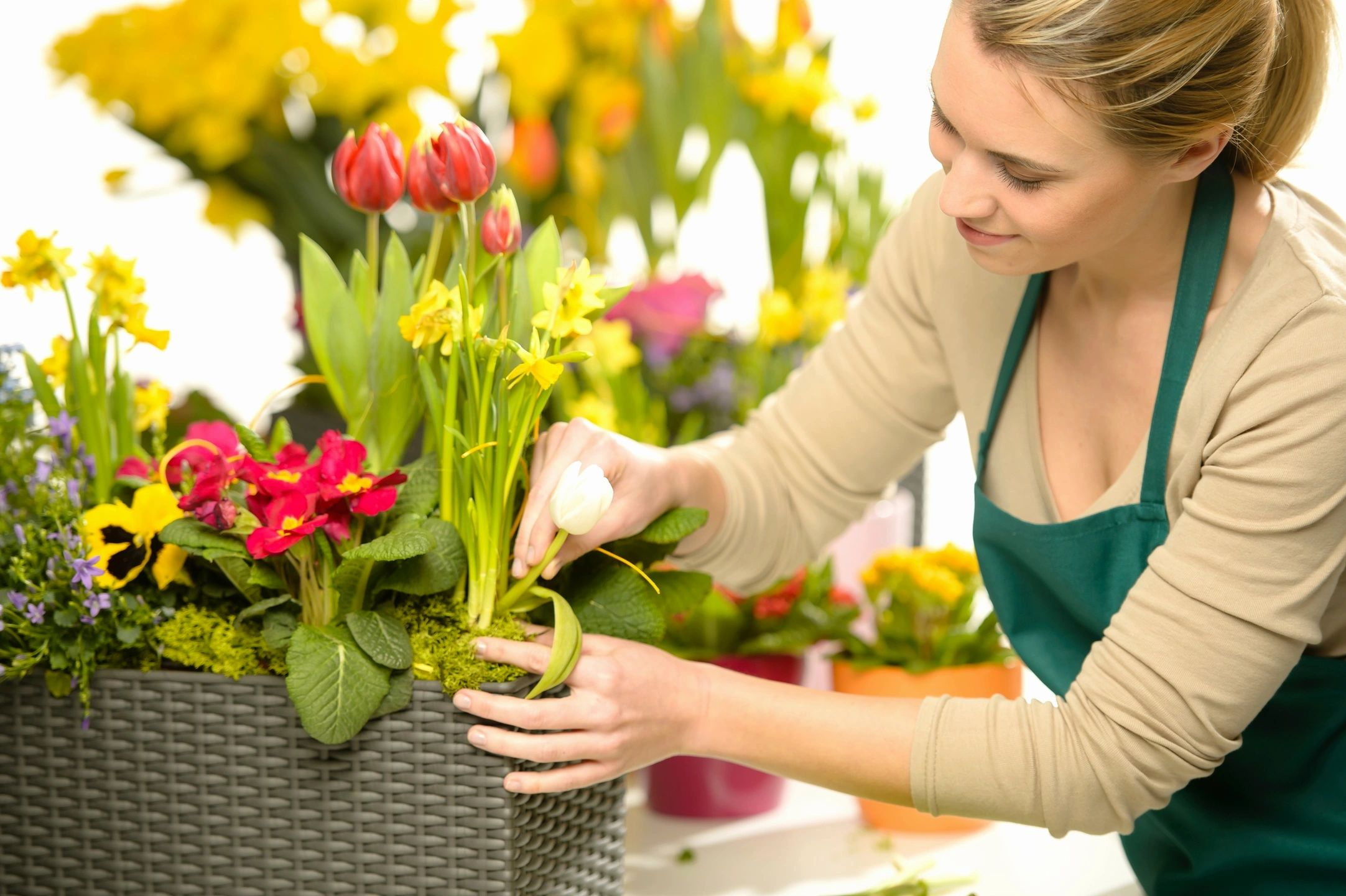 Read more about the article 8 Plants Available at Your Local Botanical Shop