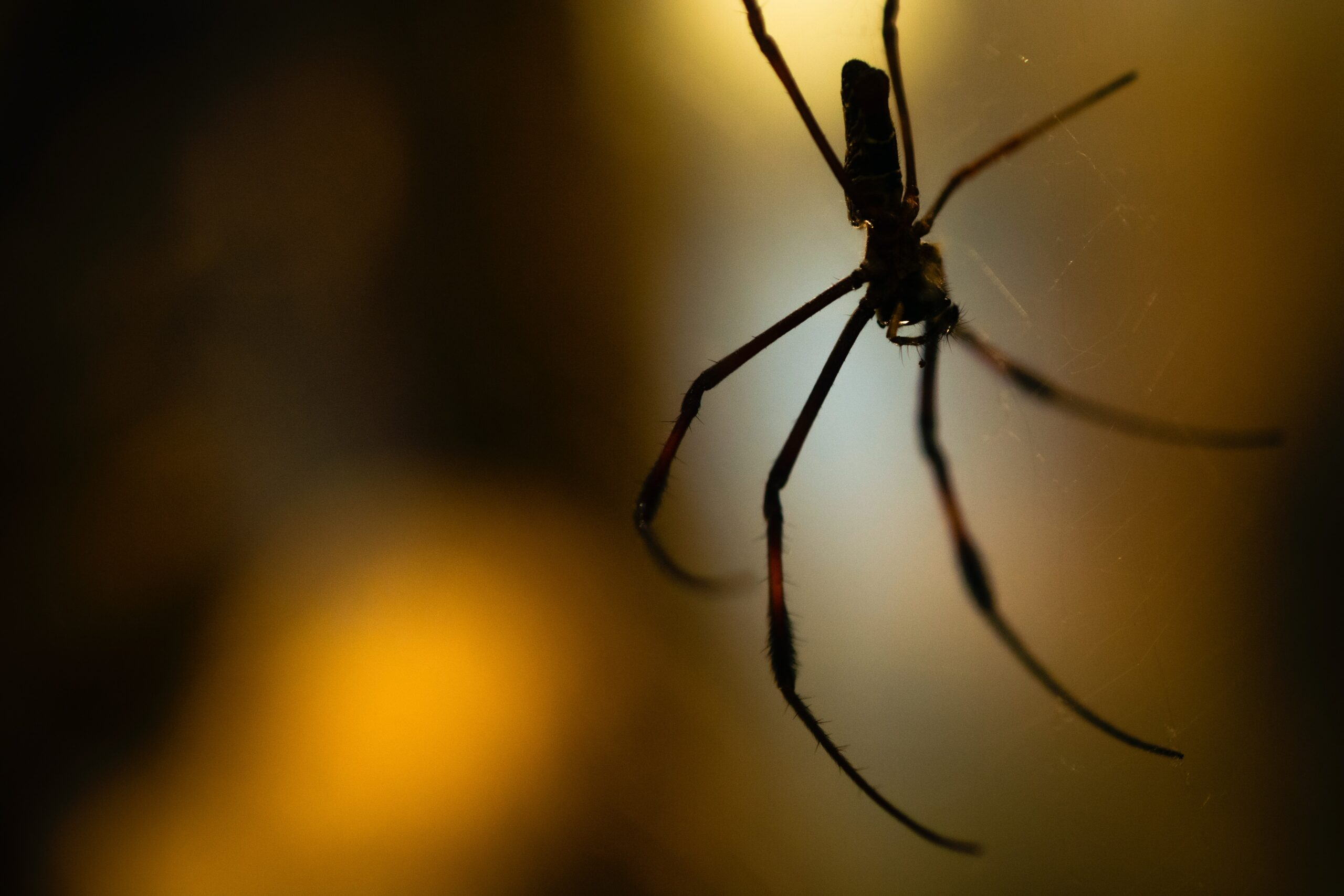 5 of the Most Common Spiders Found in Nashville