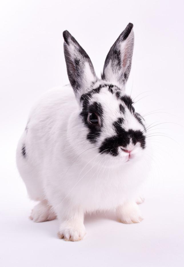 photodune-5555071-rabbit-s copy