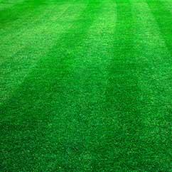 Turf fertilization and maintenance
