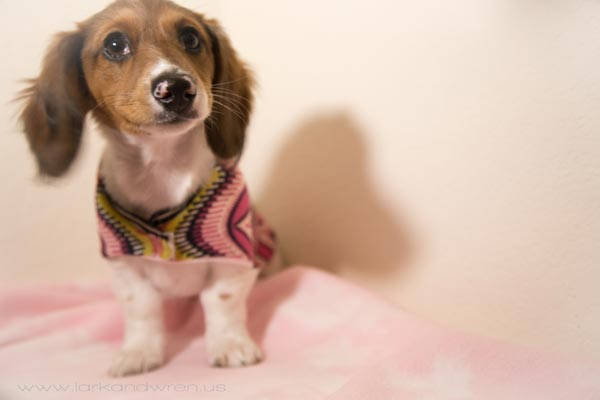 How to make a dog sweater
