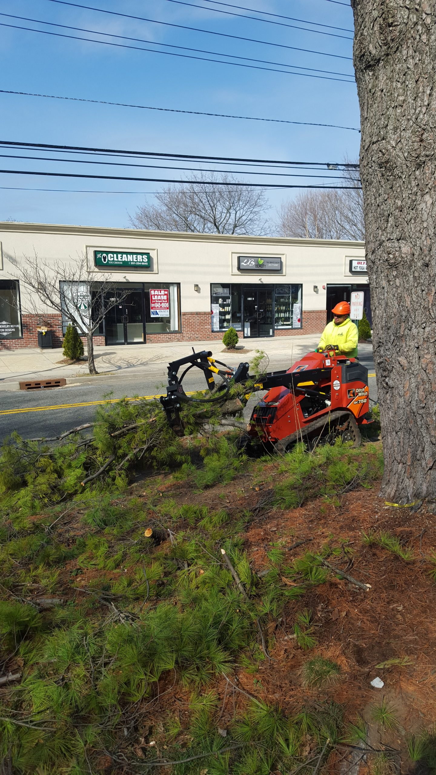 NJ Commercial Tree Care and Removal