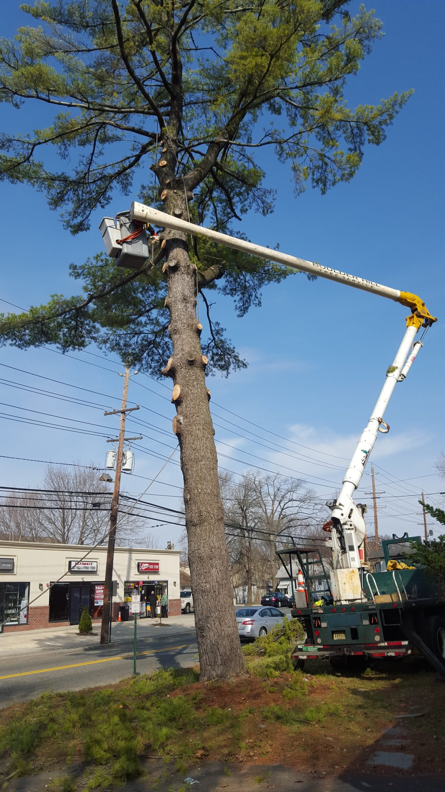 NJ Tree Removal and Care Commercial