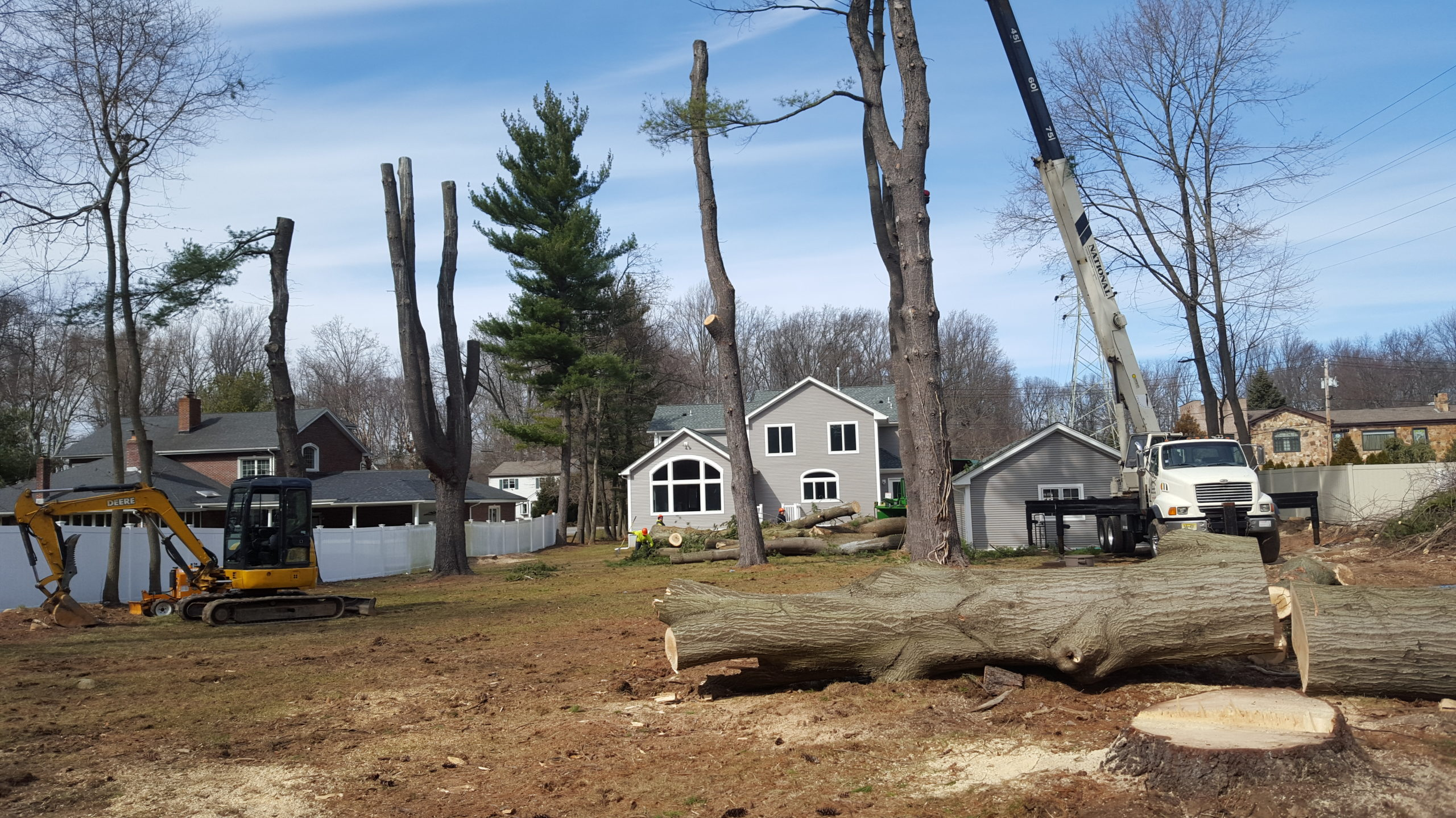 North NJ Tree Removal Services