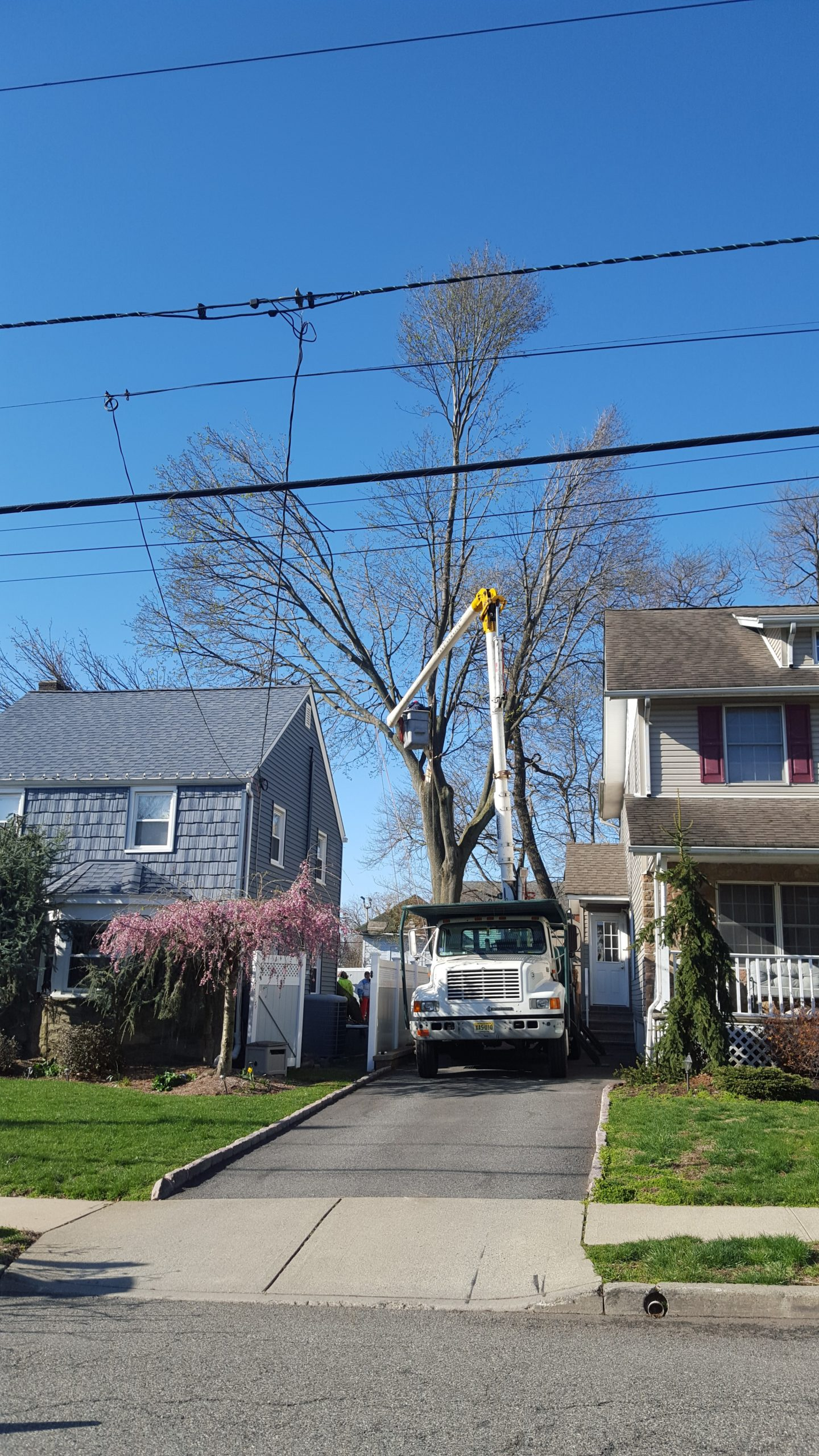 Boulder Hill Tree Removal Residential