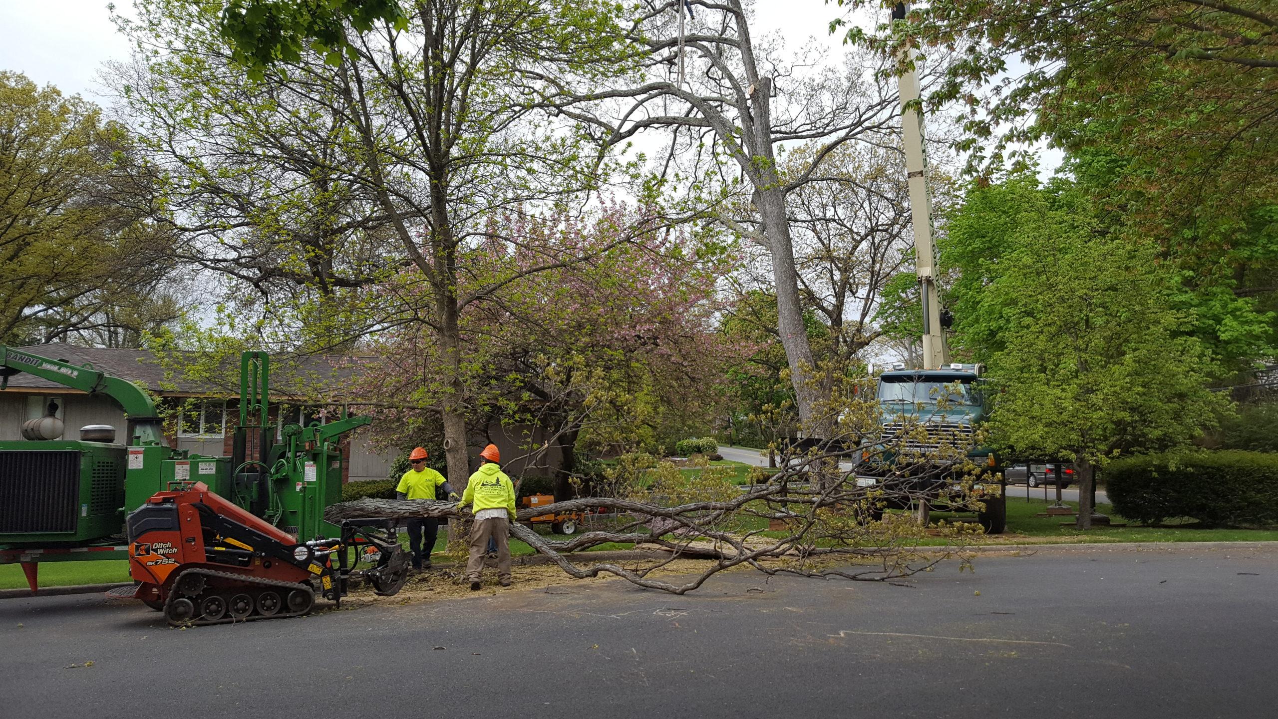 Boulder Hill NJ Tree Removal Service