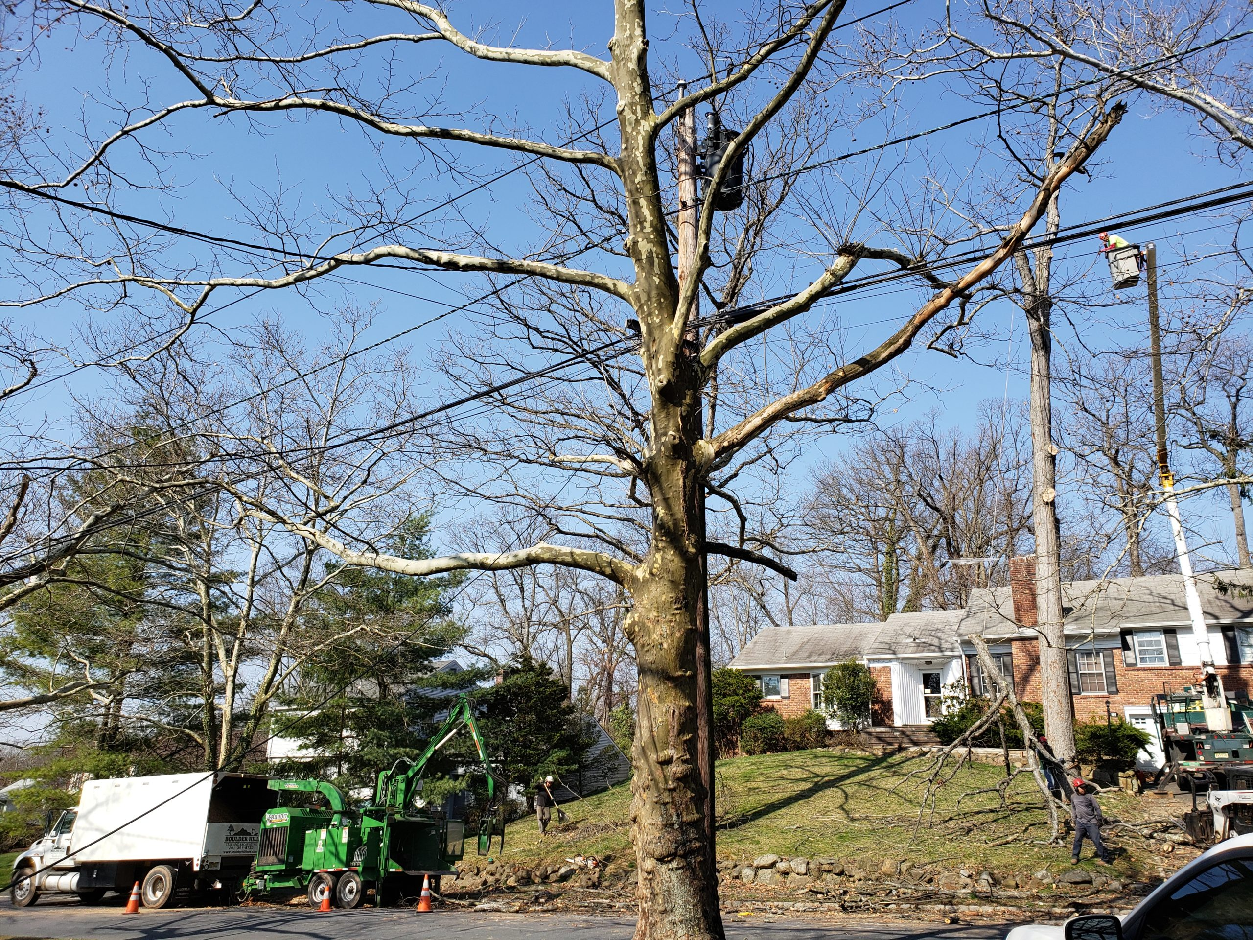 NJ Residential Tree Removal