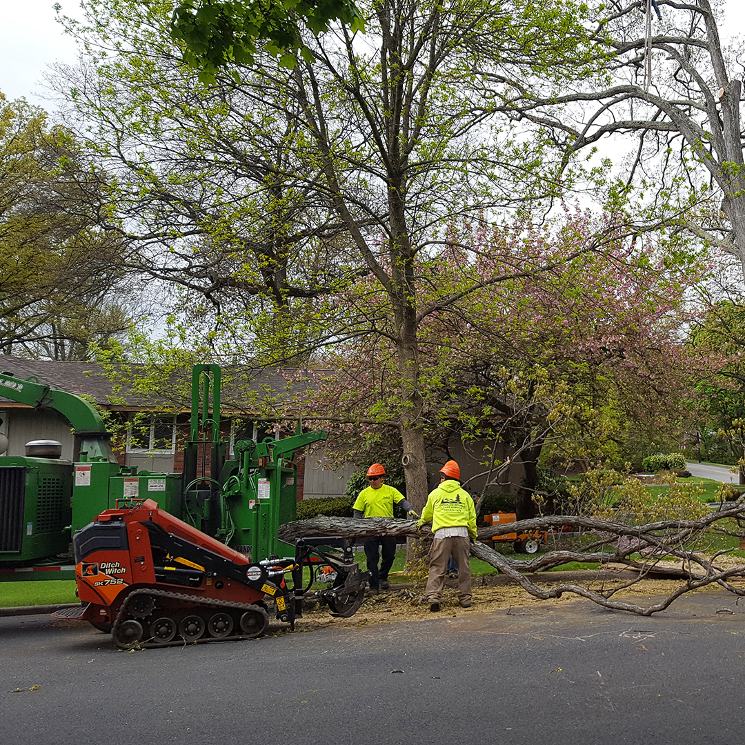 Residential and Commercial Tree Removal Services