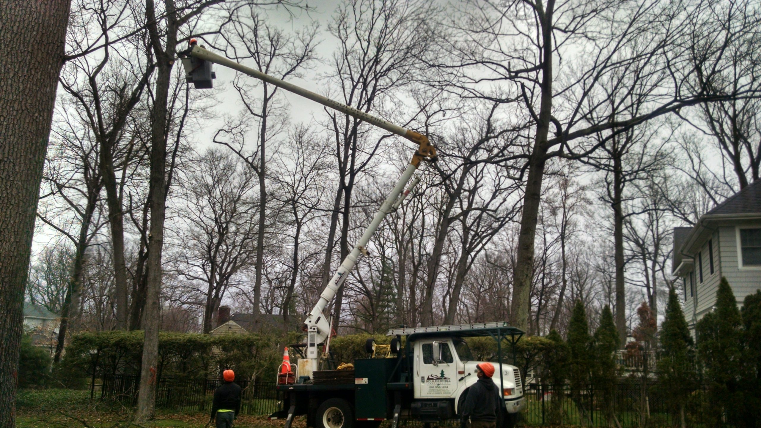 NJ Residential Tree Pruning