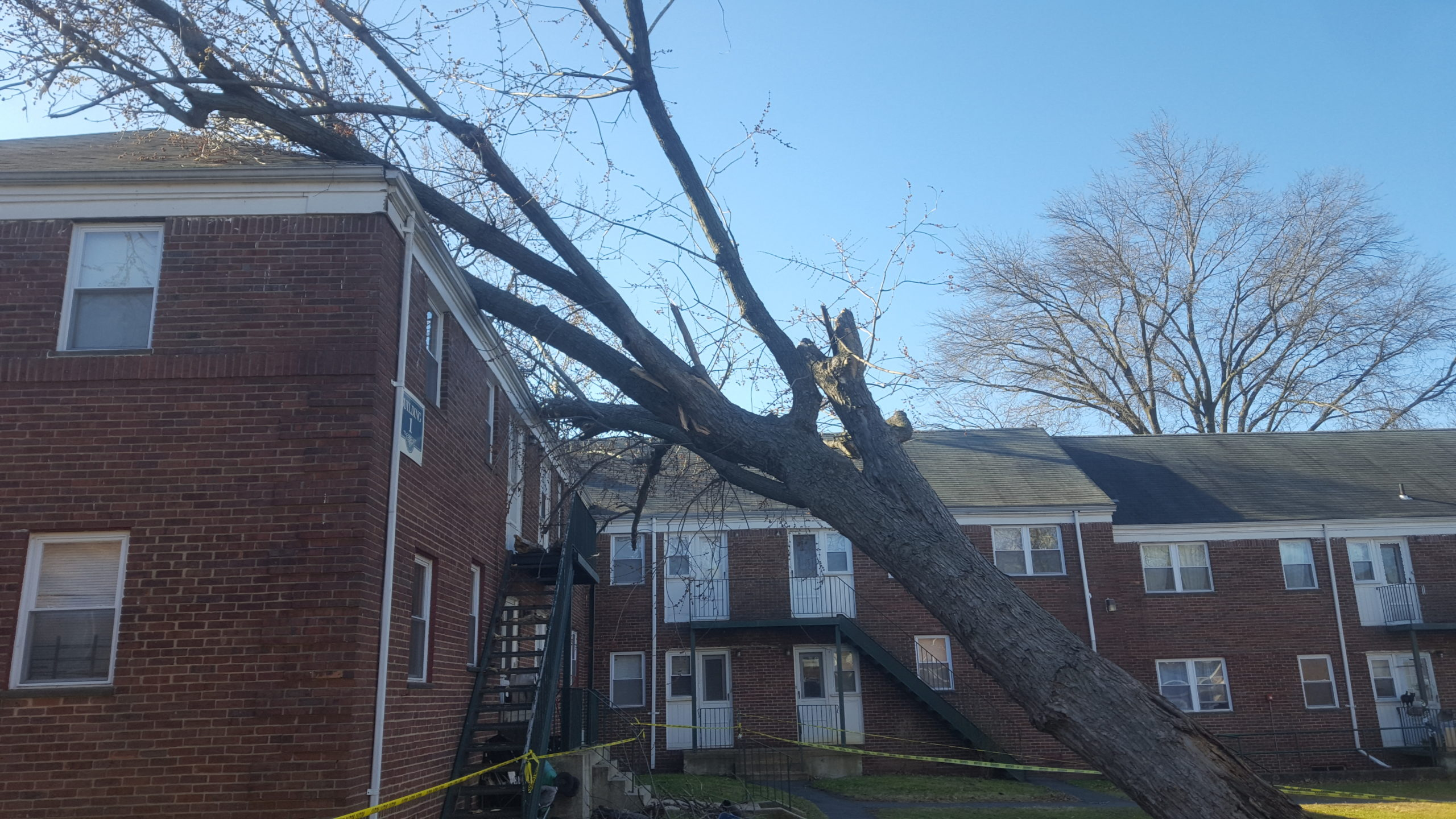 Tree Fell on Residence - NJ Storm Damage Services
