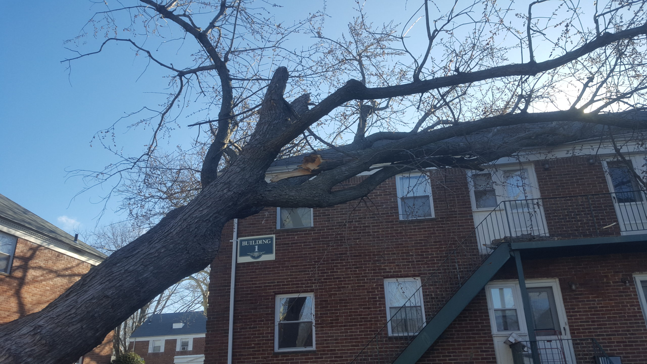 Tree on Apartment Building - Storm Damage Services