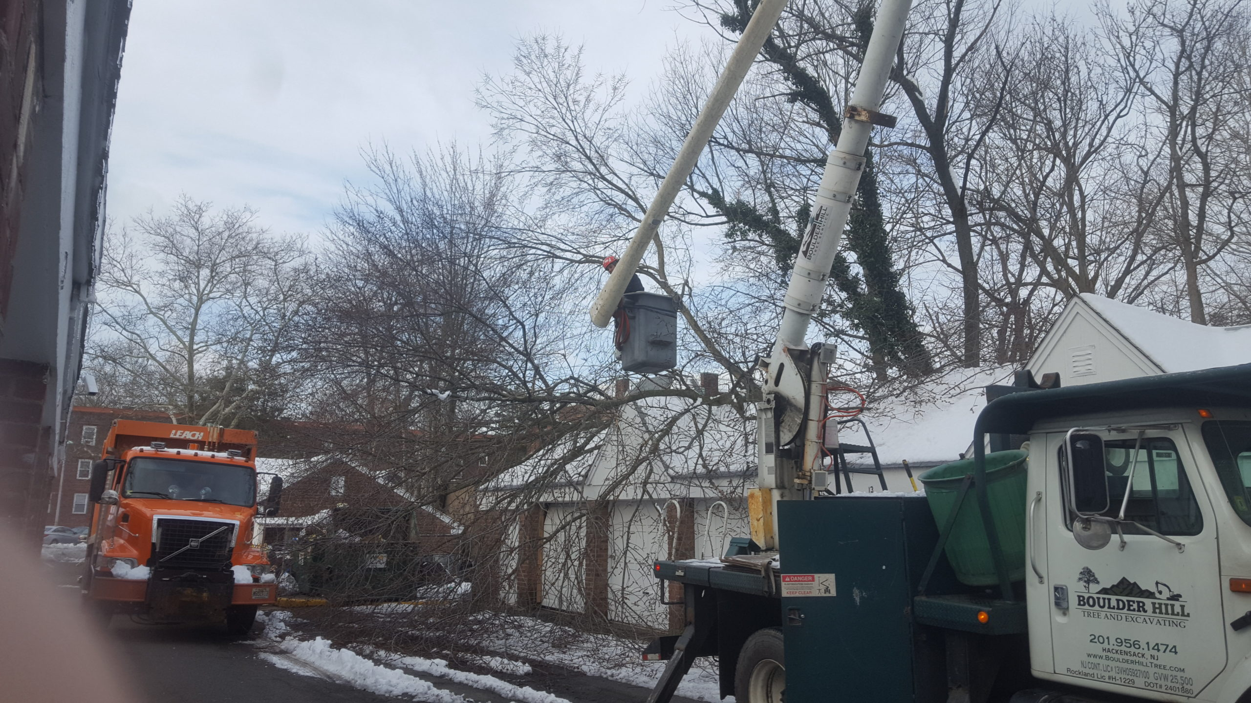 Boulder Hill Tree Pruning Services NJ