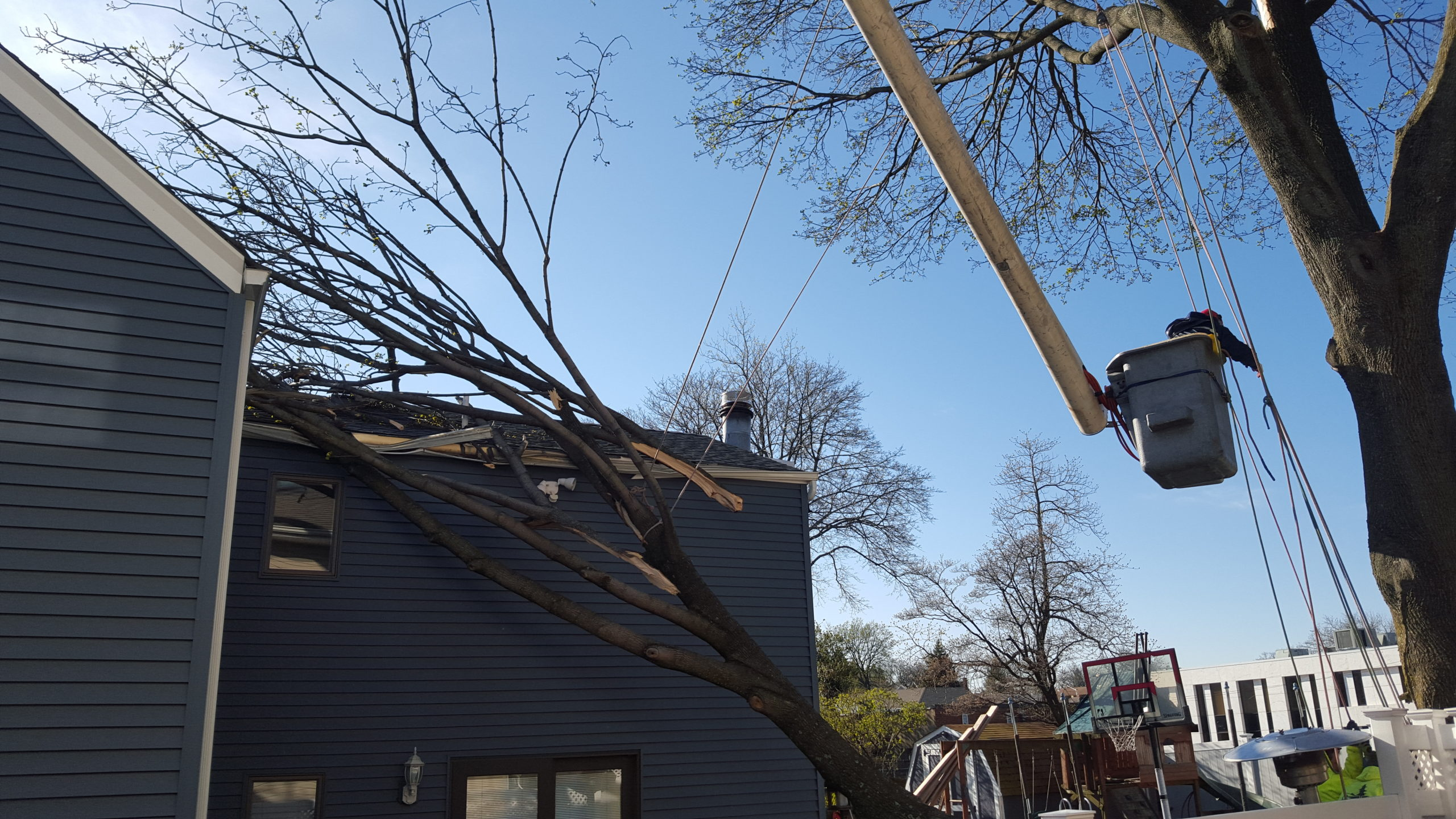 Storm Damage and Tree Care Services
