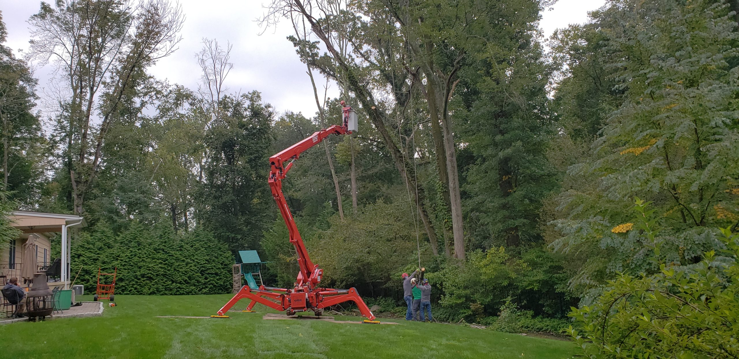 North NJ Tree Pruning Services