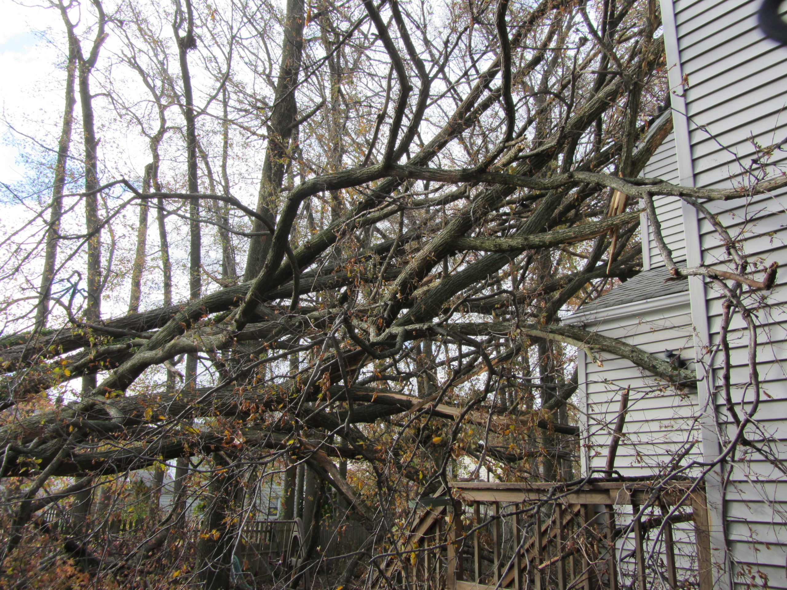 Building Damage - Storm Damage and Tree Removal Services